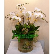 White Orchids 5 Stems